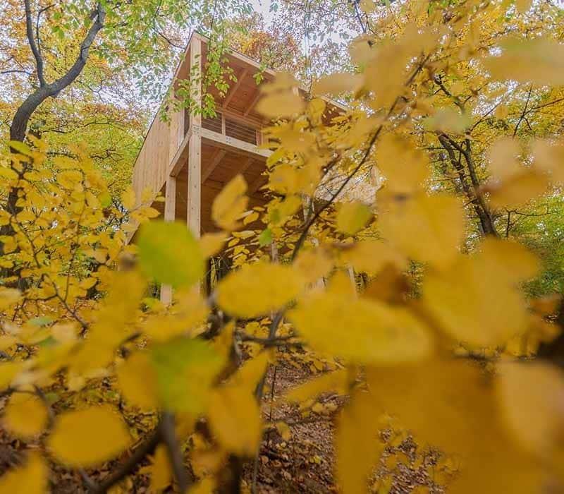 treehouses-noszvaj-lombhazak-galeria10
